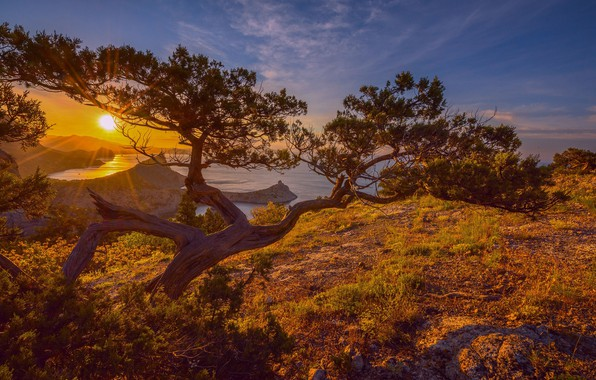 Picture the sky, the sun, rays, light, sunset, nature, tree, dawn, pine