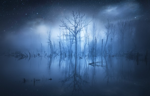 Picture water, stars, trees, fog, reflection, glow, trees, water, glow, stars, fog, reflection, Christian Lindsten