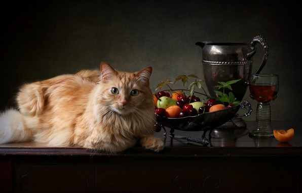 Picture cat, cat, look, berries, glass, red, pitcher, fruit, cat