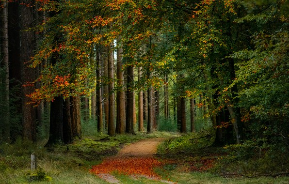 Picture road, autumn, forest, trees, Netherlands