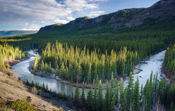 Picture forest, landscape, mountains, nature, river, beauty, panorama