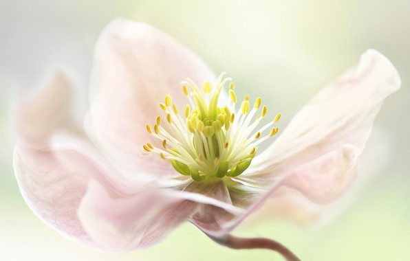 Picture flower, light, background, mid