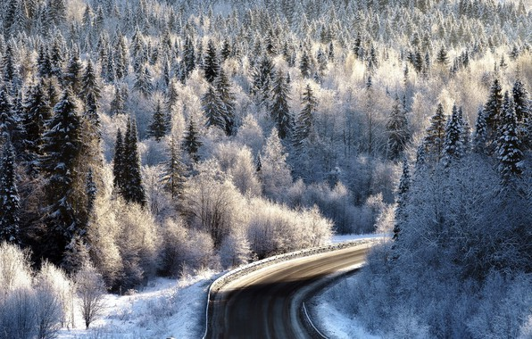 Picture winter, frost, road, forest