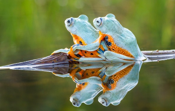 Picture water, background, frog, frogs