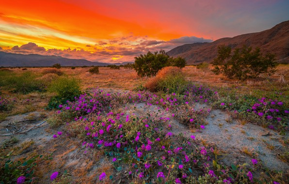 Picture the sky, clouds, sunset, flowers, nature, CA