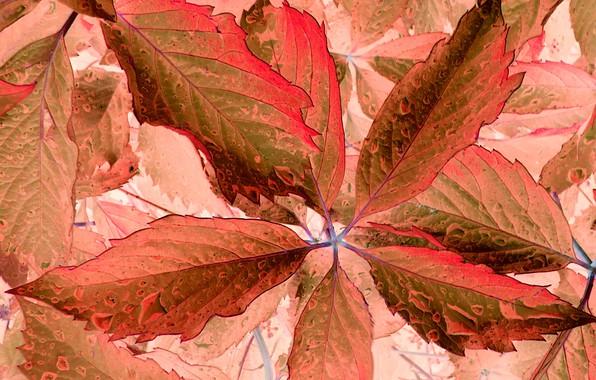 Picture color, fantasy, leaf