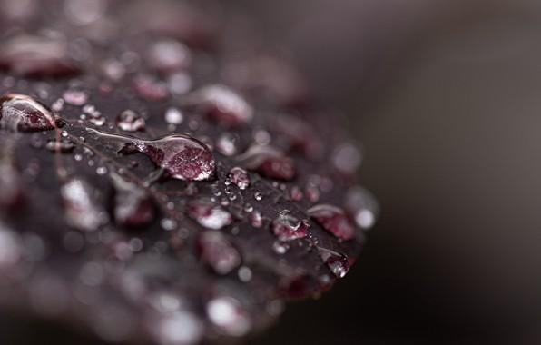 Picture wallpaper, wet, nature, macro, drops, leaf, dew