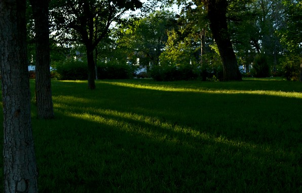 Picture summer, grass, leaves, the sun, rays, trees, landscape, nature, shadow, day, summer, grass, trees, leaves, …