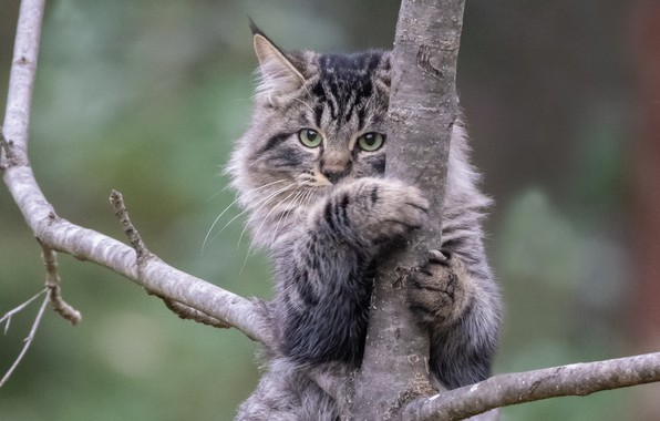 Picture cat, cat, background, tree, on the tree, cat
