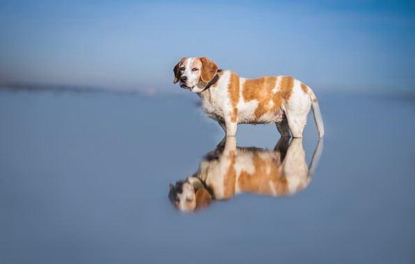 Picture the sky, look, face, water, nature, reflection, blue, background, blue, blue, dog, wet, bathing, red, …