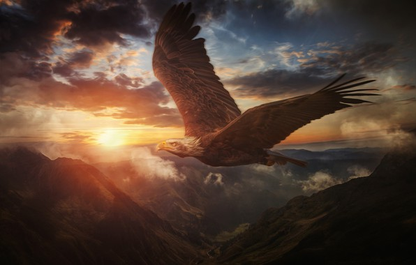 Picture the sky, sunset, mountains, bird, wings, flight, Bald eagle