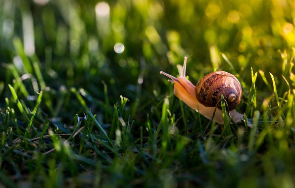 Picture greens, summer, grass, macro, light, glare, snail, shell, weed, horns, bokeh