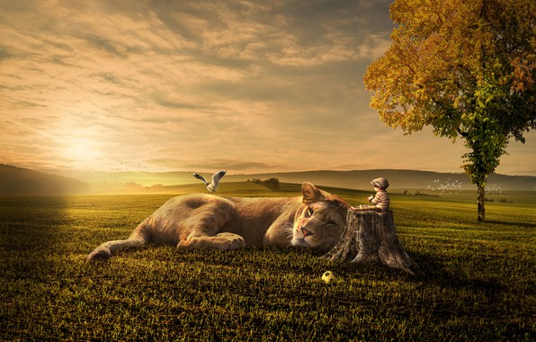 Picture field, autumn, cat, the sky, grass, the sun, clouds, light, birds, fantasy, tree, mood, hills, …