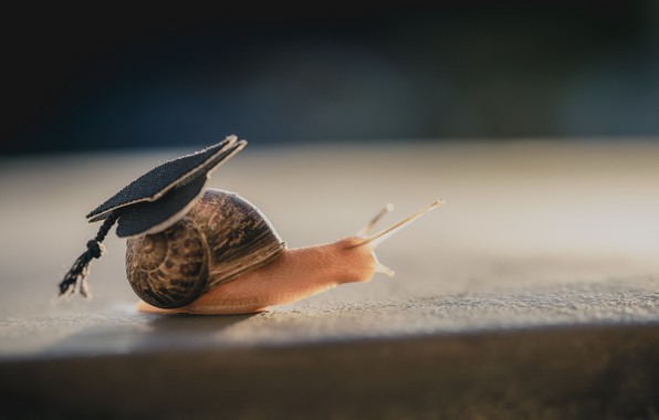 Picture nature, snail, hat