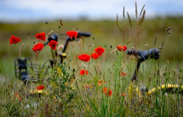 Picture field, flowers, nature, bike, Maki, bokeh