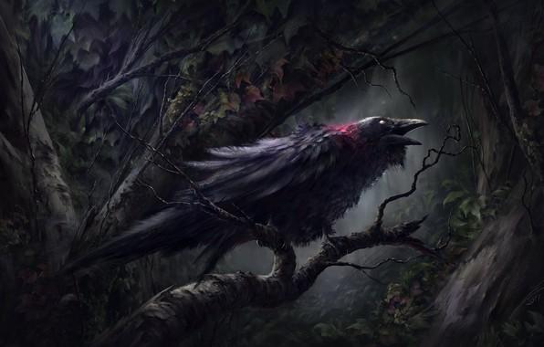 Picture blood, dark forest, in the dark, damn place, black Raven