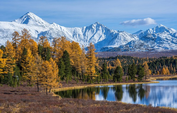 Picture autumn, forest, trees, mountains, lake, Russia, The Altai Mountains, The Altai mountains, Lake Cicely