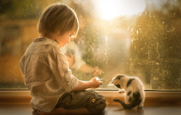 Picture boy, window, kitty, friends