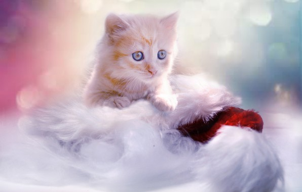 Picture baby, red, Christmas, New year, kitty, cap