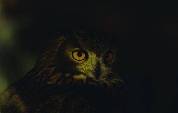 Picture dark, close-up, animals, eyes, feathers, animal, owl, wildlife, yellow-orange