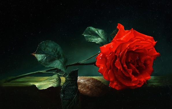 Picture oil, Alexei Antonov, «Роза»