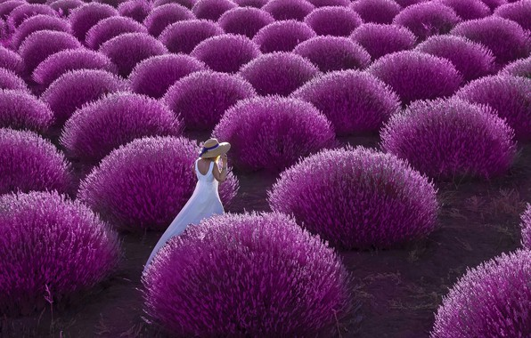Picture field, girl, woman, walk, the bushes, lavender