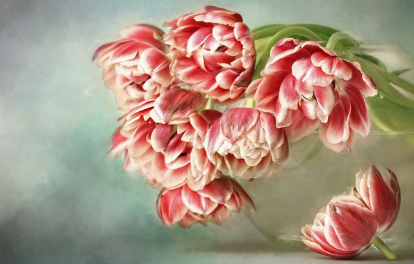 Picture water, flowers, background, bouquet, art, tulips, red, vase, painting, buds, glass, Terry