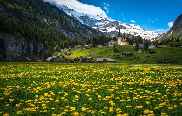 Picture flowers, mountains, home, Switzerland, village, Alps, meadow, dandelions, Switzerland, Alps, Urnerboden, The Canton Of URI, …