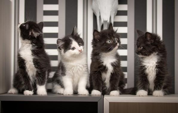 Picture kittens, kids, Quartet