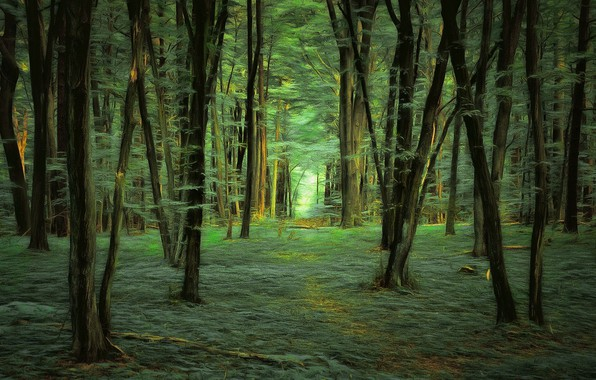 Picture forest, trees, digital painting