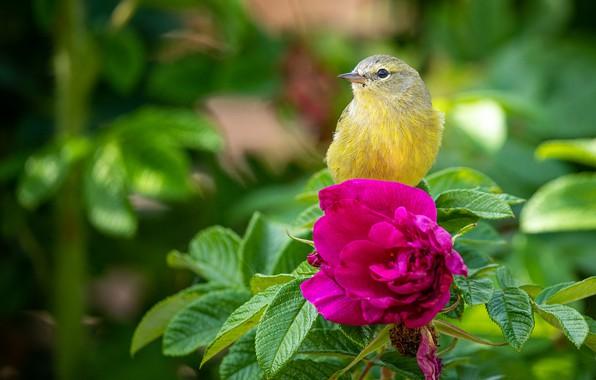 Picture flower, briar, bird