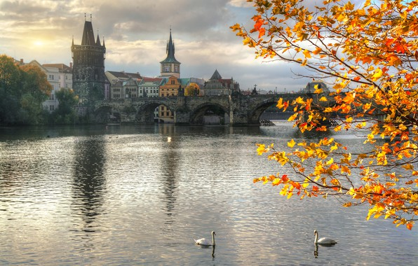 Picture autumn, branches, bridge, the city, river, building, home, Prague, tower, swans, Vltava, Ed Gordeev, Gordeev …