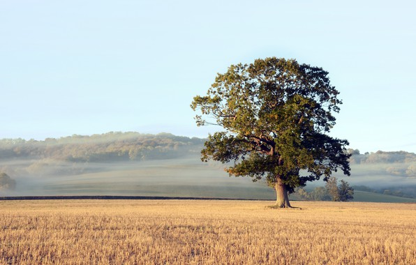 Picture field, autumn, fog, tree, morning