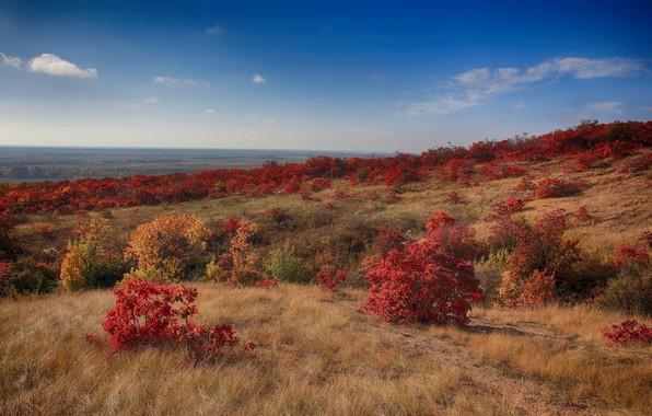 Picture autumn, the sky, landscape, nature, beauty, slope