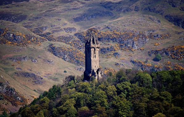 Picture trees, mountains, tower, Scotland, Stirling, Wallace Monument Stirling, patnik