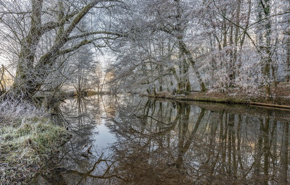 Picture winter, frost, forest, trees, lake, mist