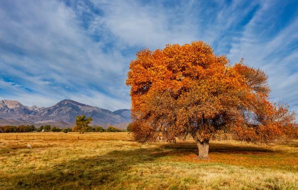 Picture United States, California, Sierra Trailer Park