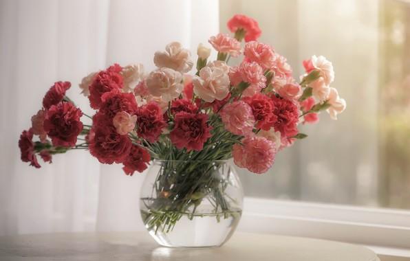 Picture flowers, window, clove