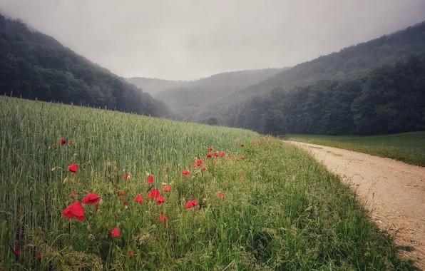 Picture road, summer, Maki