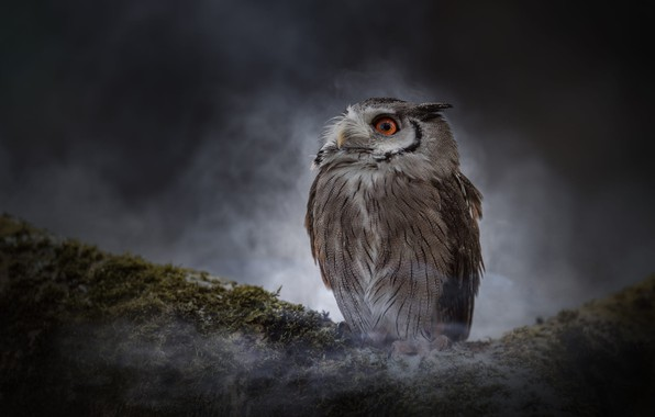Picture look, night, nature, fog, darkness, the dark background, owl, bird, moss, couples, owl