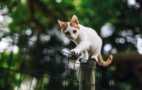 Picture cat, white, look, nature, pose, kitty, background, mesh, foliage, the fence, paws, walk, kitty, bokeh, …