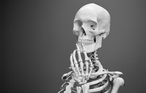 Picture Grey Background, Skeleton, Etymology