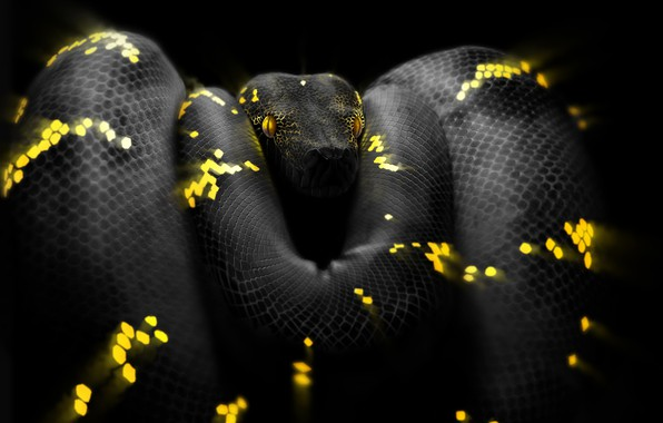 Picture Snake, Eyes, Head, Python, Art, Snake, Python, by Ben Judd, Ben Judd, Surreal Snake