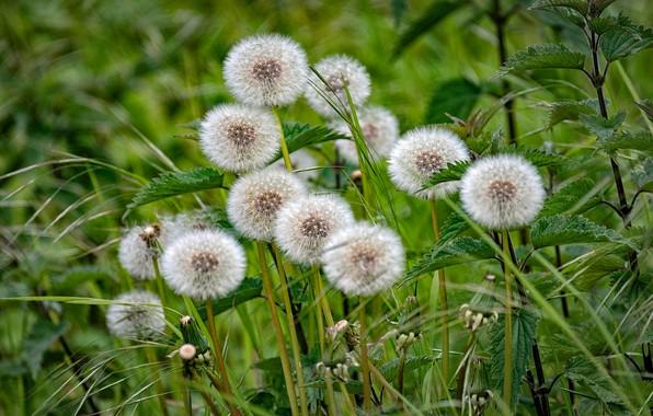 Picture grass, dandelions, nettle