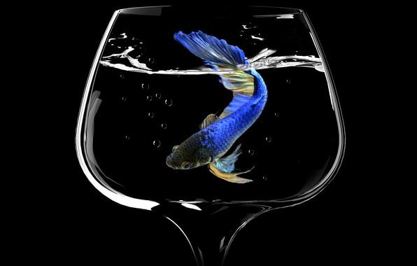Picture bubbles, glass, fish, glass, bubbles, fish