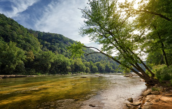 Picture forest, summer, trees, nature, river, shore, slope