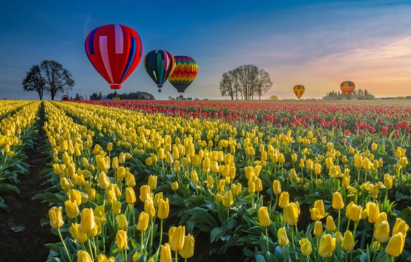 Picture balloon, balloons, field, Spring, tulips