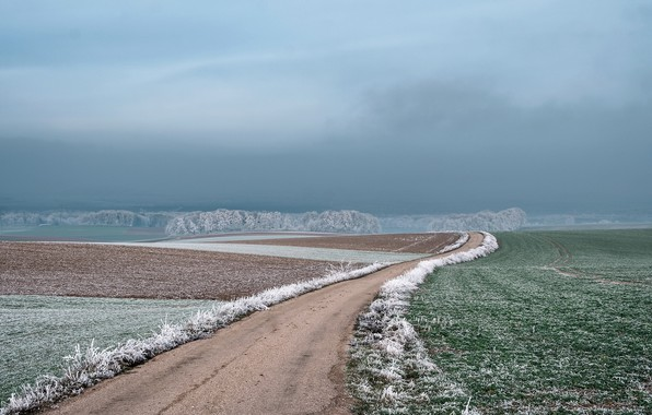 Picture frost, road, fog