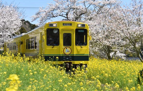 Picture trees, landscape, nature, Park, train, spring, Japan, grass, flowering, cherry