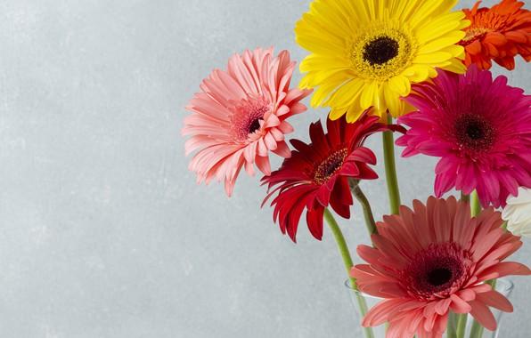Picture flowers, bouquet, gerbera, flowers